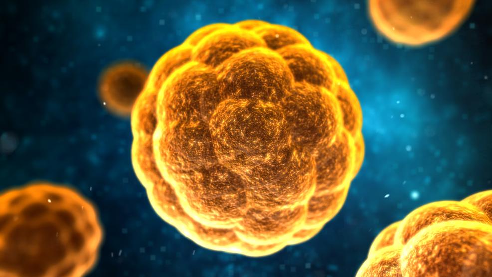 Hepatitis dengan memakan mahkota dewa