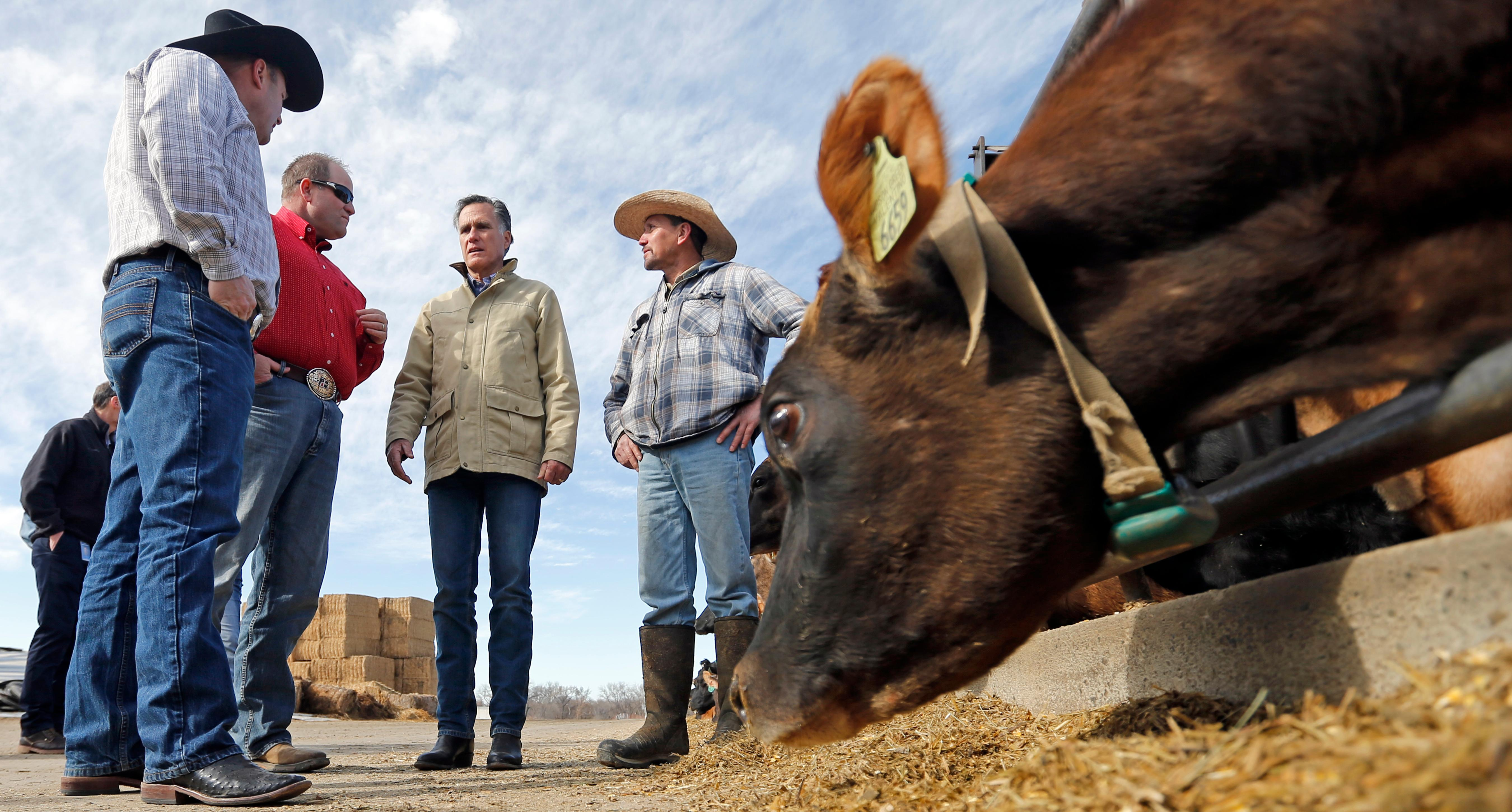 Former Republican presidential candidate Mitt Romney tours Gibson's Green Acres Dairy Friday, Feb. 16, 2018, in Ogden, Utah. The 2012 Republican presidential candidate plans to bid for the seat being vacated by retiring seven-term Utah Sen. Orrin Hatch. (AP Photo/Rick Bowmer)