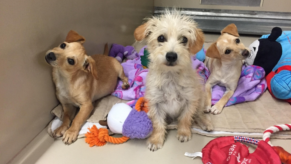 3 small puppies dumped in laundromat rescued by boulder for Dog pound las vegas nevada