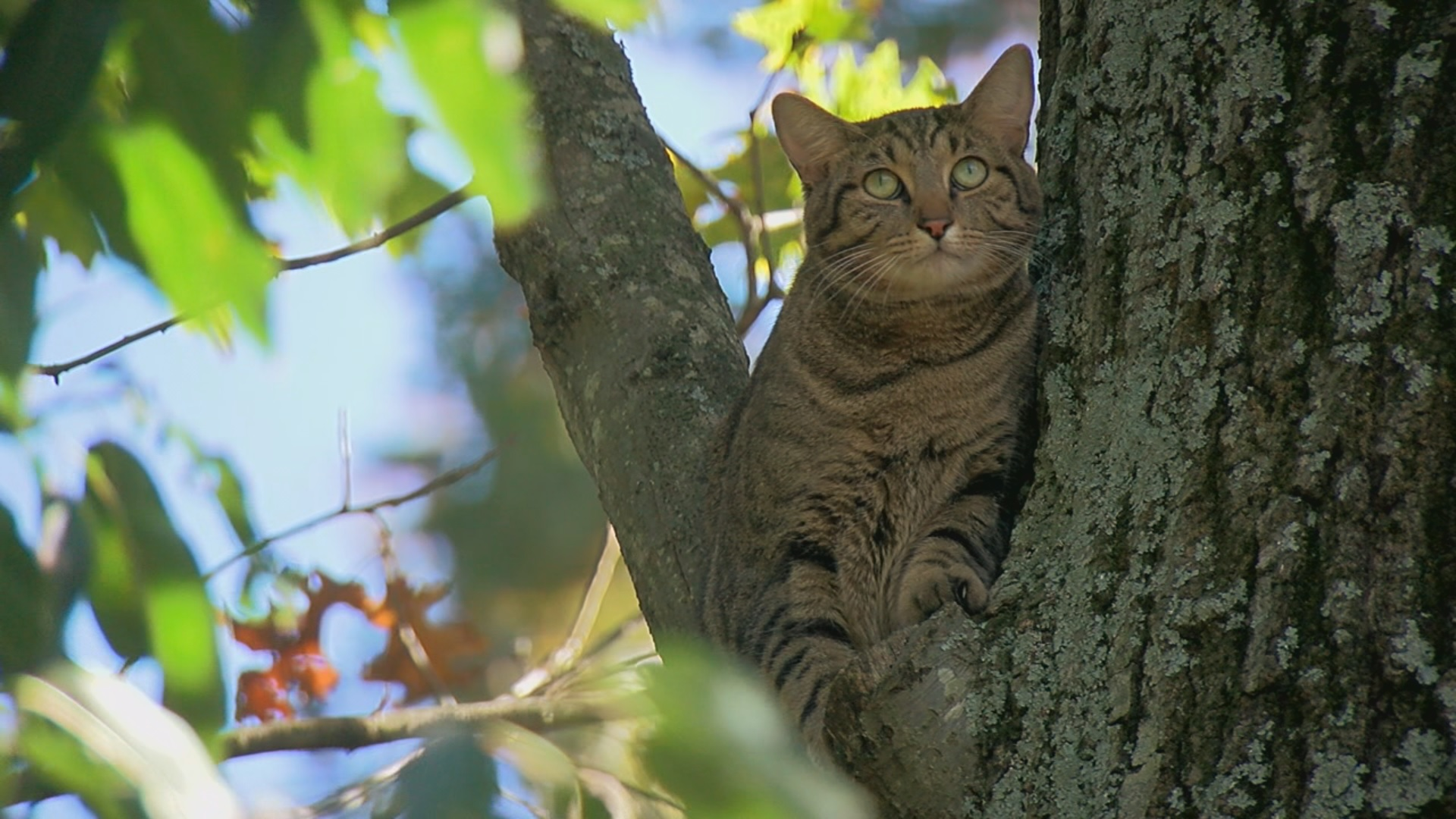 Cat in a tree. (Edward Coker/ABC7 News)