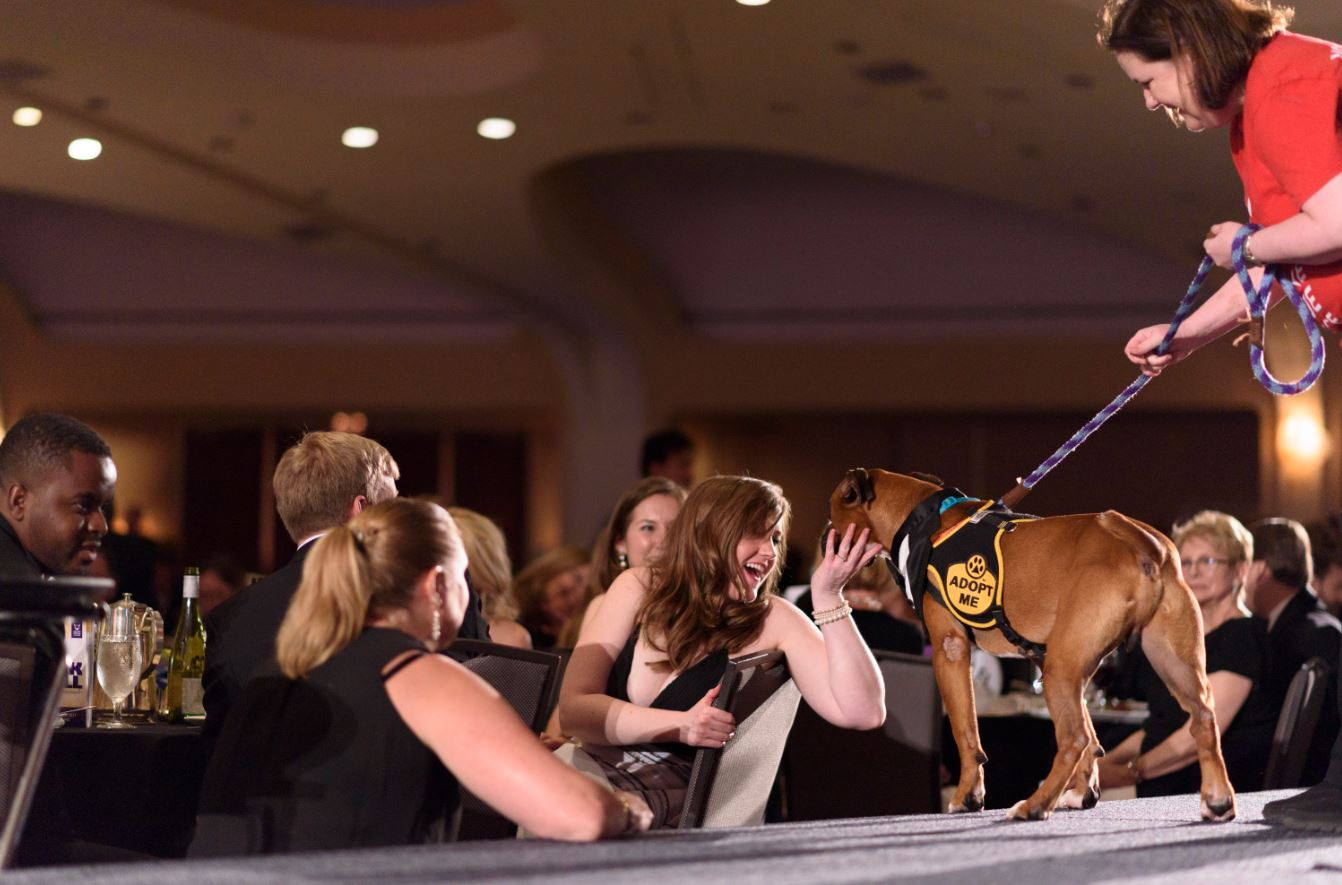 The 30th annual Bark Ball hosted by the Humane Rescue Alliance brought out some really elegant ties, Venetian masks and pearl necklaces -- and that was just the attire of the four-legged attendees! More than 500 fashionable canines and their owners showed up to help raise nearly $700,000 for the organization. (Image Franz Mahr)