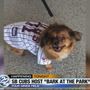South Bend Cubs host 'Bark at the Park'
