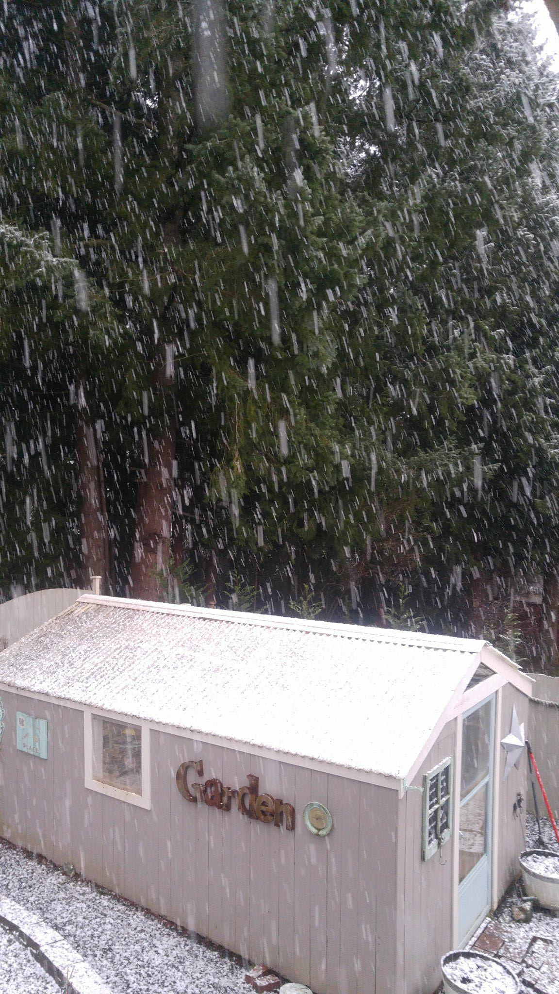 Snow in Chehalis. (Photo: Courtesy of Dennis Fabere)<p></p>