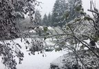 woodinville_snow_01.jpg