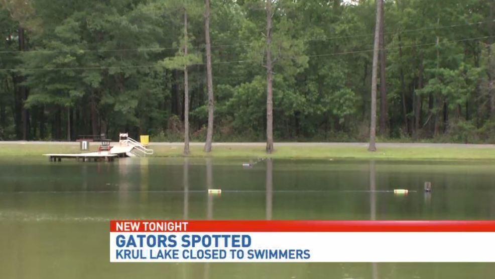Gators Spotted At Krul Lake Could Impact Summer Season Wear